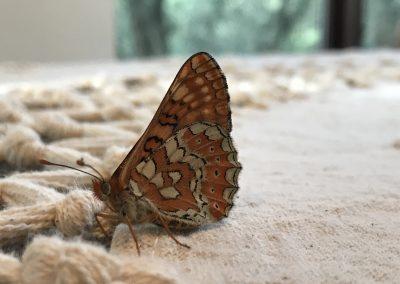 ecolodgecabaneros,conservacion,vidasalvaje,mariposa,jpg