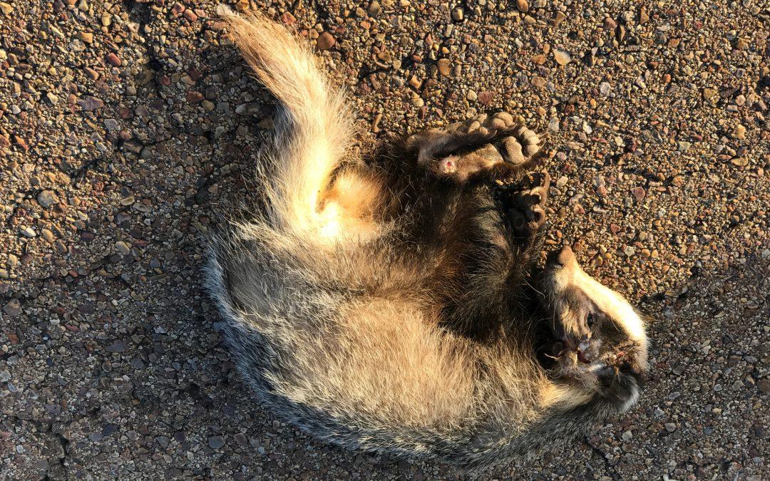 El ecolodge Cabañeros contra los atropellos continuados de vida salvaje