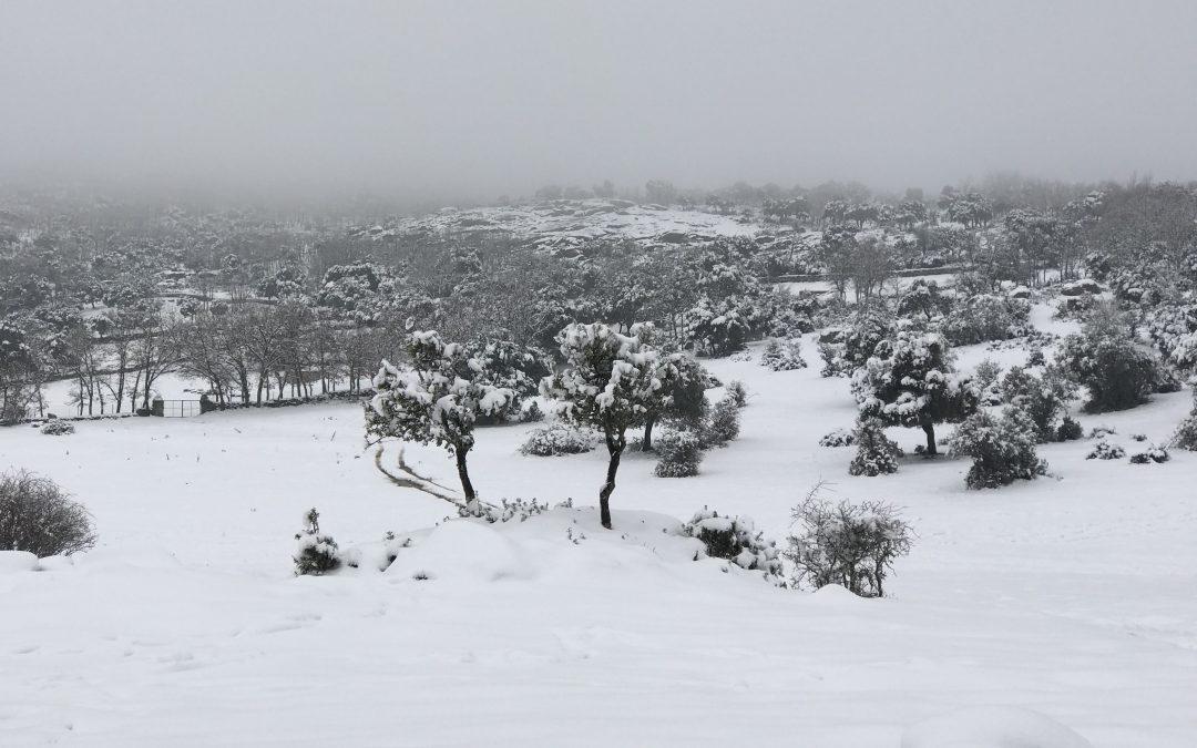 La nieve que transforma el paisaje cerca del ecolodge