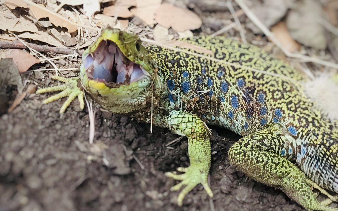 La vida salvaje en el ecolodge (II)
